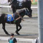 帯広の紫竹ガーデンの後はばんえい競馬でエンジョイ!