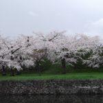 北海道お花見はいつ頃?五稜郭公園周辺散策なら観光駐車場がおすすめ